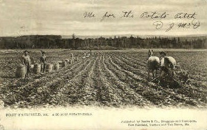 50 Acre Potato Field - Fort Fairfield, Maine ME Postcard