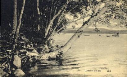 Lakeside Birches - Greenville, Maine ME Postcard