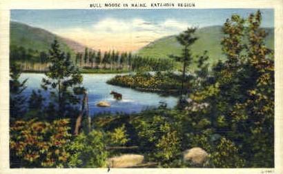 Bull Moose - Mt. Katahdin, Maine ME Postcard