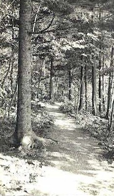 Jordan Pond Trail - Mt. Desert Island, Maine ME Postcard