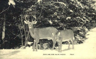 Buck & Doe - Misc, Maine ME Postcard