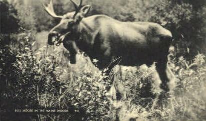 Bull Moose - Misc, Maine ME Postcard