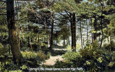 Woods - Ogunquit, Maine ME Postcard