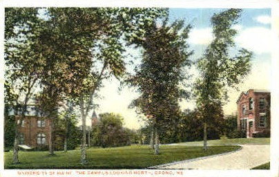 Campus, University of Maine - Orono Postcard