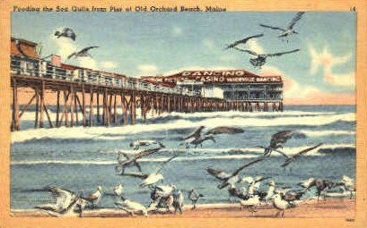 Feeding the Sea Gulls - Old Orchard Beach, Maine ME Postcard