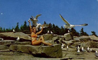 Feeding the Gulls - Acadia National Park, Maine ME Postcard