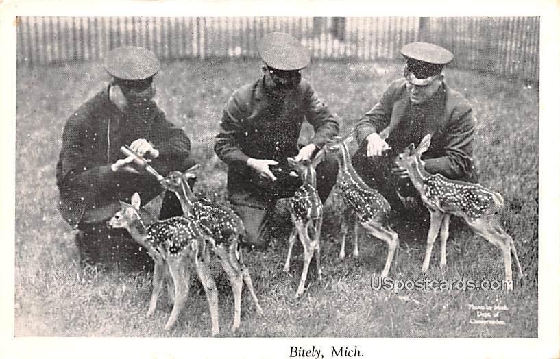 Baby Deers - Bitely, Michigan MI Postcard