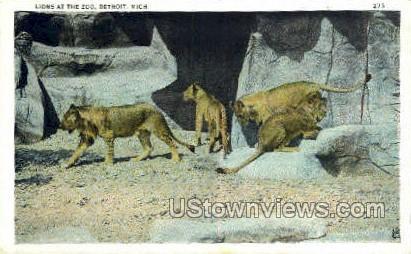 Lions at the Zoo - Detroit, Michigan MI Postcard