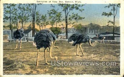 Ostriches at New Zoo - Detroit, Michigan MI Postcard