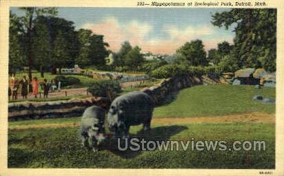 Hippopotamus at Zoological Park - Detroit, Michigan MI Postcard
