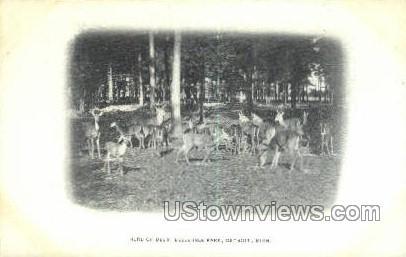 Deer, Belle Isle Park - Detroit, Michigan MI Postcard