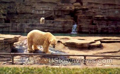 Polar Bears, Detroit Zoo - Michigan MI Postcard