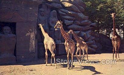 Giraffes, Zoological Park - Detroit, Michigan MI Postcard