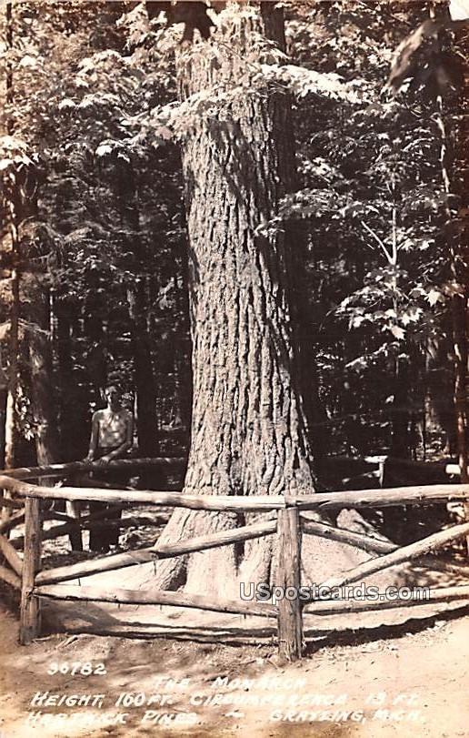 The Monarch - Grayling, Michigan MI Postcard