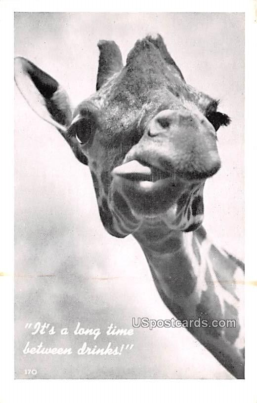 It's a long time between drinks, Giraff - MIsc, Michigan MI Postcard