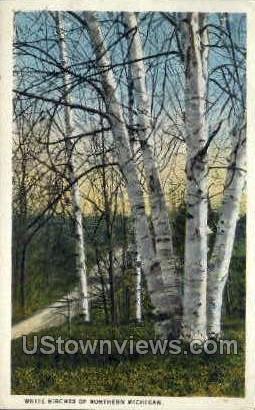 White Birches of Northern Mich. - MIsc, Michigan MI Postcard