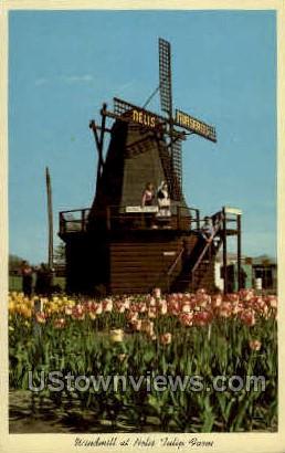 Windmill at Nelis Tulip Farm - MIsc, Michigan MI Postcard