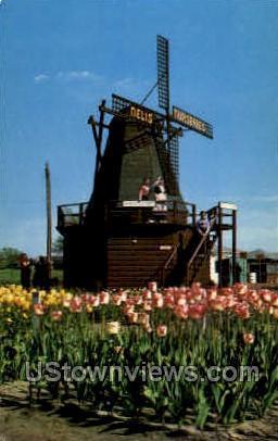 Nelis Tulip Farm - MIsc, Michigan MI Postcard