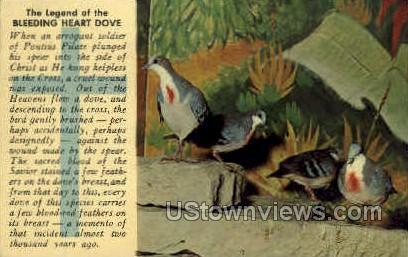 Legend of the Bleeding Heart Dove - MIsc, Michigan MI Postcard