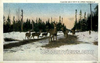 Feeding Wild Deer - MIsc, Michigan MI Postcard
