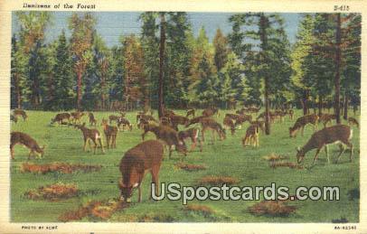 Denizens - MIsc, Michigan MI Postcard