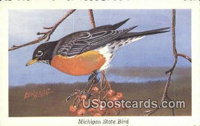 Michigan State Bird, Robin - MIsc Postcard