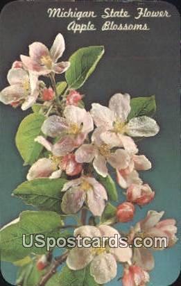 Apple Blossom, State Flower - MIsc, Michigan MI Postcard