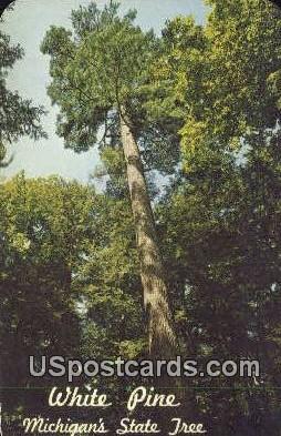 White Pine, Michigan State Tree - MIsc Postcard