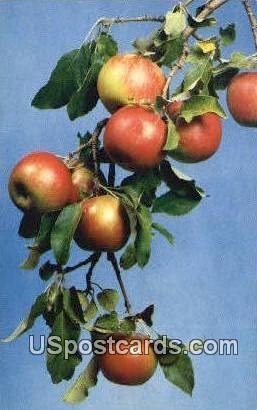 Michigan Apples - MIsc Postcard
