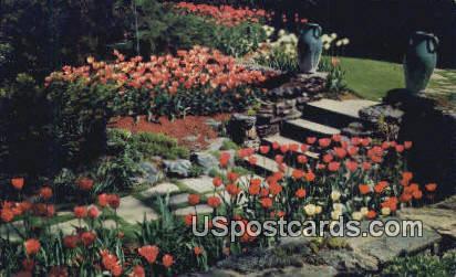 Tulip Time - MIsc, Michigan MI Postcard