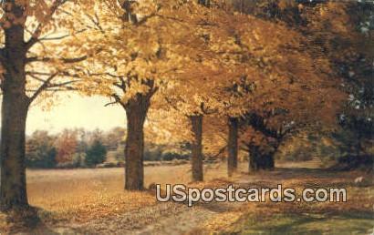 Fall Scenes - MIsc, Michigan MI Postcard