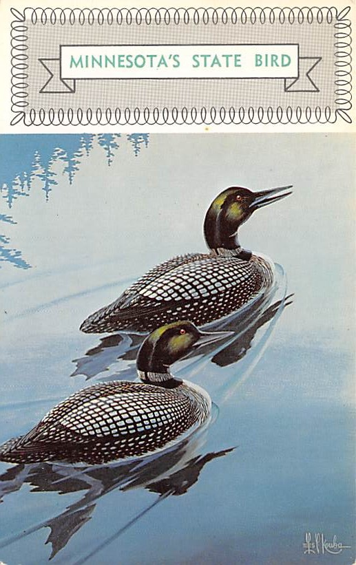 Minnesota State Bird MN