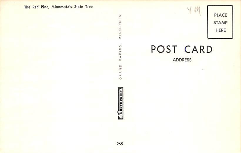 Minnesota State Tree MN 1