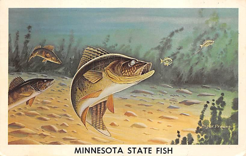 Minnesota State Fish MN