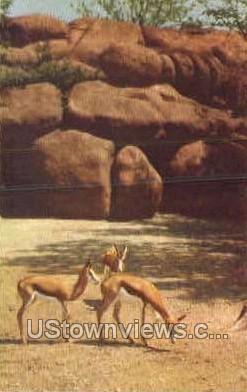 Springbuck Antelope - St. Louis, Missouri MO Postcard