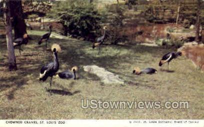 Crowned Cranes - St. Louis, Missouri MO Postcard