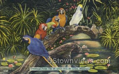 St. Louis Zoo - Missouri MO Postcard