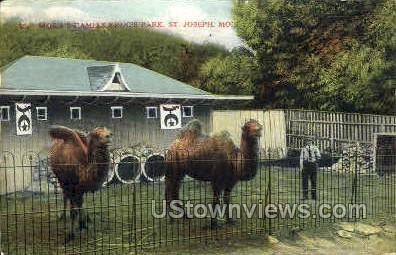 Moila's Camels - St. Joseph, Missouri MO Postcard