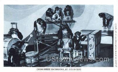 Chimpanzee Orchaestra - St. Louis, Missouri MO Postcard