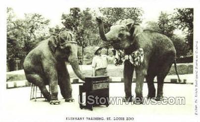 Elephant Training - St. Louis, Missouri MO Postcard