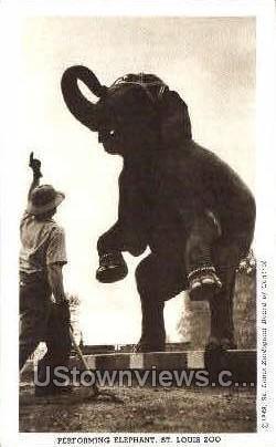 Performing Elephant - St. Louis, Missouri MO Postcard