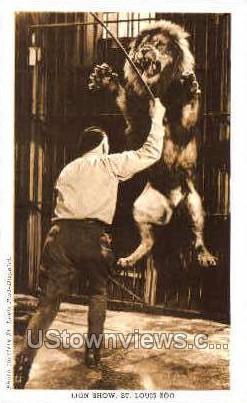 Lion Show, St. Louis Zoo - Missouri MO Postcard