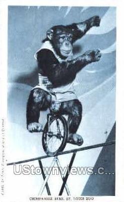 Chimpanzee Star - St. Louis, Missouri MO Postcard