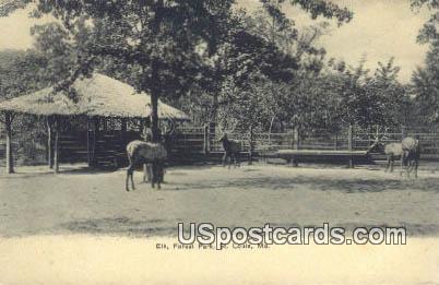 Elk, Forest Park - St. Louis, Missouri MO Postcard