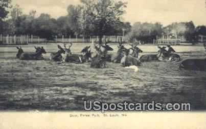 Deer, Forest Park - St. Louis, Missouri MO Postcard