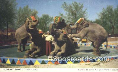 Elephant Show, St. Louis Zoo - Missouri MO Postcard