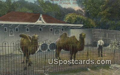 Camels, Krug Park - St. Joseph, Missouri MO Postcard