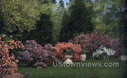 Blooming Azaleas  - Gulf Coast, Mississippi MS Postcard