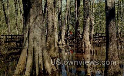 Trace Park Way Cypress Swamp - Natchez, Mississippi MS Postcard