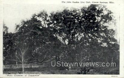The John Live Oaks  - Ocean Springs, Mississippi MS Postcard